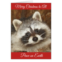 Pixie Raccoon Christmas Greetings Card
