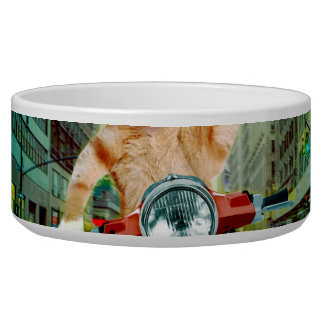 pizza cat - cat - pizza delivery bowl