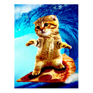 Pizza Surfing Cat Postcard