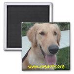 PJ, www.dogduty.org Imán