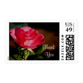 PK Knockout Rose Stamp-customize