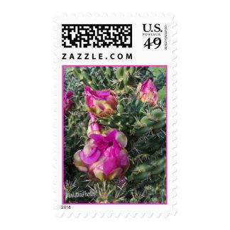 PkCactus stamp