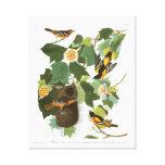 Placa 12 Baltimore Oriole de Audubon Impresión En Tela
