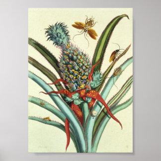 Placa 1 de las generaciones del insecto póster