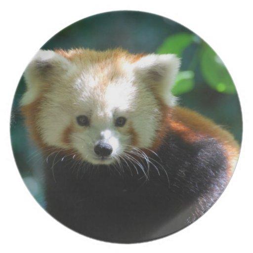 Placa adorable de la panda roja plato