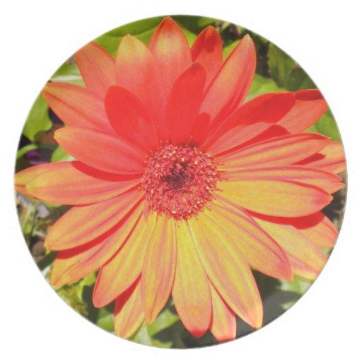 Placa anaranjada de la margarita del Gerbera Platos
