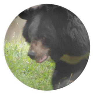 Placa asiática del oso negro plato de cena