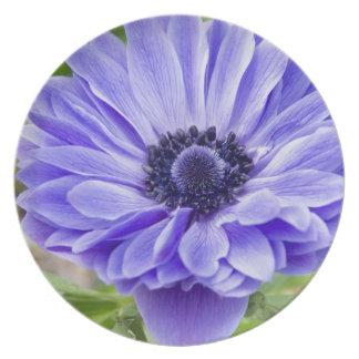 Placa azul de la flor del aster plato para fiesta
