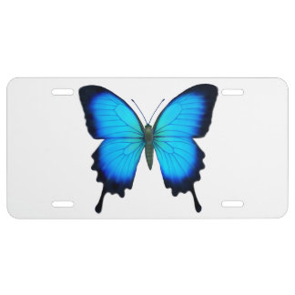 Placa azul de la mariposa de Papilio Ulises Placa De Matrícula