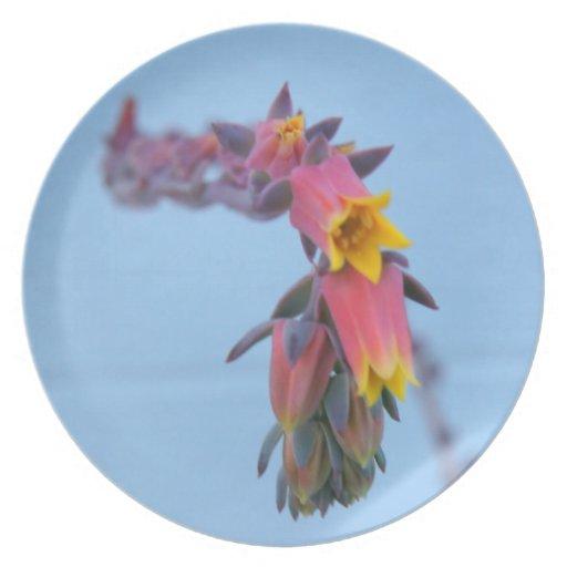 Placa azul y rosada de la flor platos