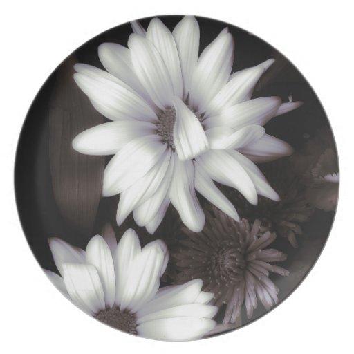 Placa blanca de las margaritas del Gerbera Platos