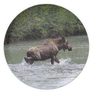 Placa canadiense del animal de la fauna de los plato