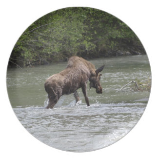 Placa canadiense del animal de la fauna de los plato para fiesta