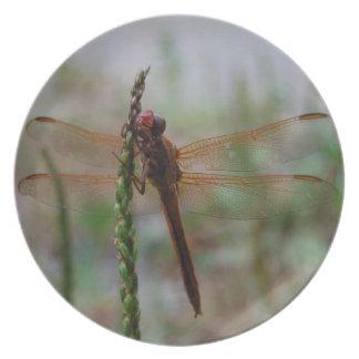 Placa cardinal de la libélula de Meadowhawk Plato