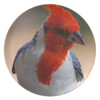 Placa cardinal dirigida roja platos de comidas