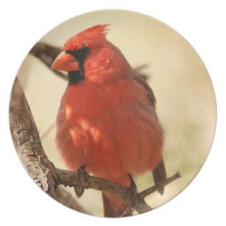Placa cardinal roja plato de comida