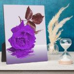 Placa color de rosa púrpura hermosa de la foto