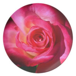 Placa color de rosa rosada oscura plato