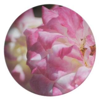 Placa color de rosa rosada plato