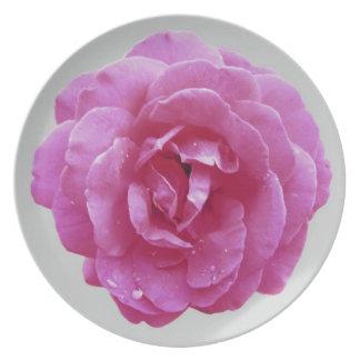 Placa - color de rosa rosado oscuro en gris claro platos