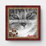 Placa conmemorativa de la foto del gato Himalayan