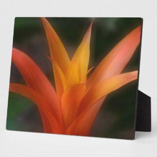Placa de Bromeliad que brilla intensamente