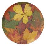 Placa de cena de las hojas de otoño plato de comida