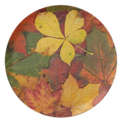 Placa de cena de las hojas de otoño platos de comidas