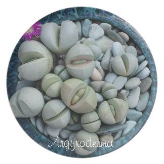 Placa de cena suculenta de la planta: Argyroderma Platos