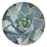 Placa de cena suculenta de la planta: Brevifolia d Platos