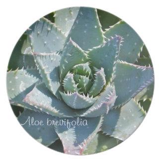 Placa de cena suculenta de la planta: Brevifolia d Plato Para Fiesta