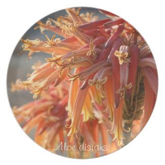 Placa de cena suculenta de la planta: Distans del  Platos
