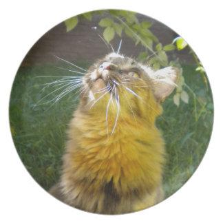Placa de colector preciosa del gatito plato