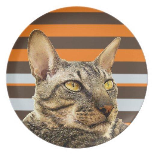Placa de Cornualles del gato de Rex de la raya ret Plato De Cena