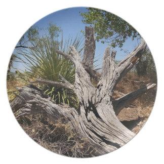 Placa de Deadwood del desierto Plato De Comida