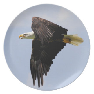 Placa de Eagle calvo Plato Para Fiesta