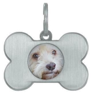 Placa de identificación adorable de Cockapoo Placa De Mascota