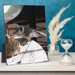 Placa de Jay gris y de la foto de Bell