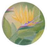 Placa de la ave del paraíso plato