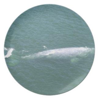 Placa de la ballena gris platos