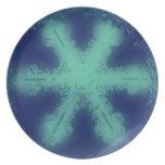Placa de la escama 9 de la nieve plato de cena