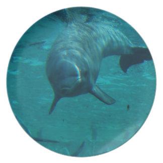 Placa de la estrella del delfín platos de comidas