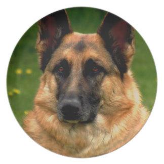 Placa de la foto del pastor alemán plato