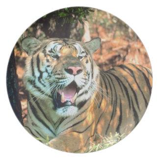 Placa de la fotografía del tigre de Bengala Platos Para Fiestas