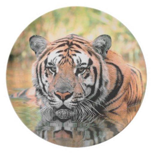 Placa de la fotografía del tigre de Bengala Plato Para Fiesta