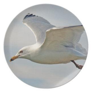 Placa de la gaviota del vuelo platos