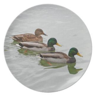 Placa de la impresión de los patos del pato silves platos de comidas