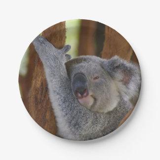 Placa de la koala del Peekaboo Plato De Papel De 7 Pulgadas