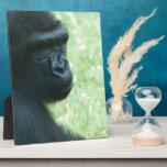 Placa de la mirada del gorila