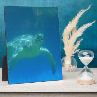 Placa de la nadada de la tortuga de mar